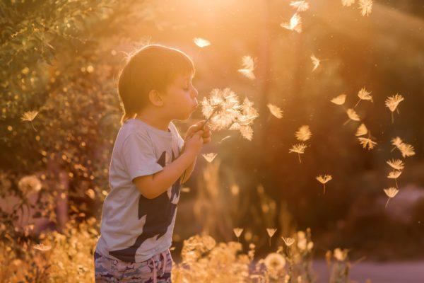 Boy Blowing a Danelion in a Field